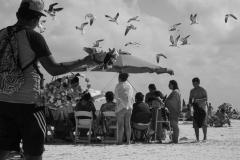 Gulls and vendor